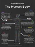 The Human Body thumb